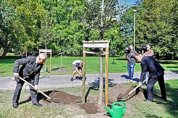 Elültették a fővárosi fatelepítési program tízezredik fáját