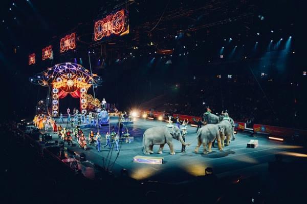 Kanadai cirkuszi társulatok érkeznek idén a Sziget fesztiválra