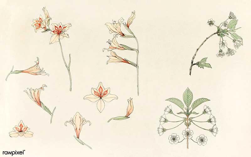 Botanikai könyvritkaságot bemutató tárlat nyílt a Természettudományi Múzeumban